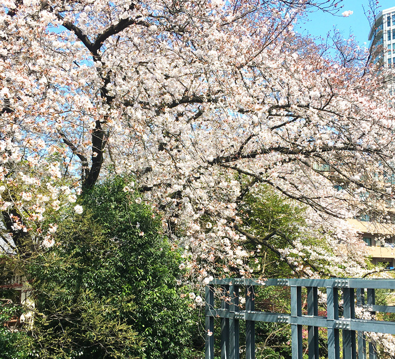 Spring has come to Tokyo Design Center!【桜の宵】お知らせ